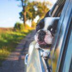 Beneficios de tener una mascota en casa: ¿es importante?