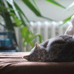 Consejos para eliminar el pelo de mascotas del hogar y la ropa