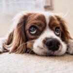 Curiosidades del comportamiento de los perros: ¡conoce sobre ellos!