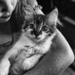 Las mejores mascotas para niños, ¿cuáles deben tener?
