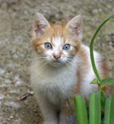 Plantas tóxicas para perros y gatos: Aprende a identificarlas