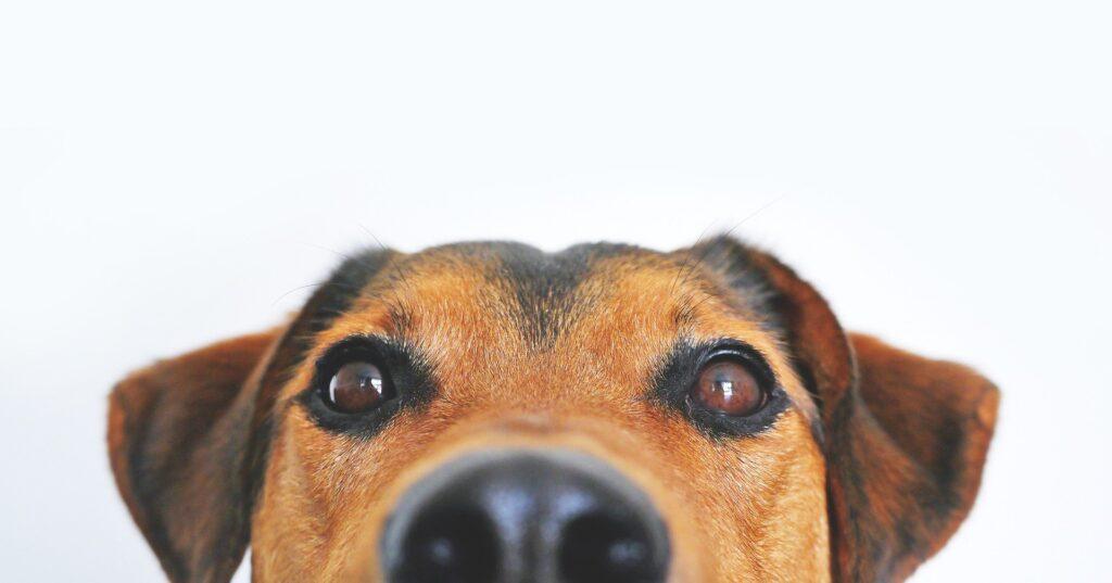 Consejos y Cuidados para mascotas