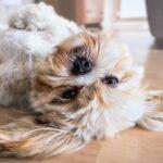 Alergia de perros; la manera de prevenir y detectarla