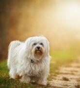 De esta forma puedes cuidar el pelo de tu perro ¡Más lacio y suave!