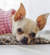 Poderes terapéuticos de tener una mascota ¡Información general!