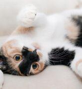 Beneficios de tener un gato, todo lo que necesitas saber sobre ellos
