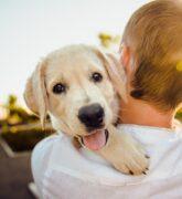 Conoce las ventajas y beneficios de adoptar una mascota
