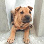 Perros cachorros: Lo que necesitas saber sobre comportamiento y cuidados
