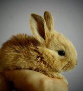 ¿Cómo cuidar un conejo como mascota?